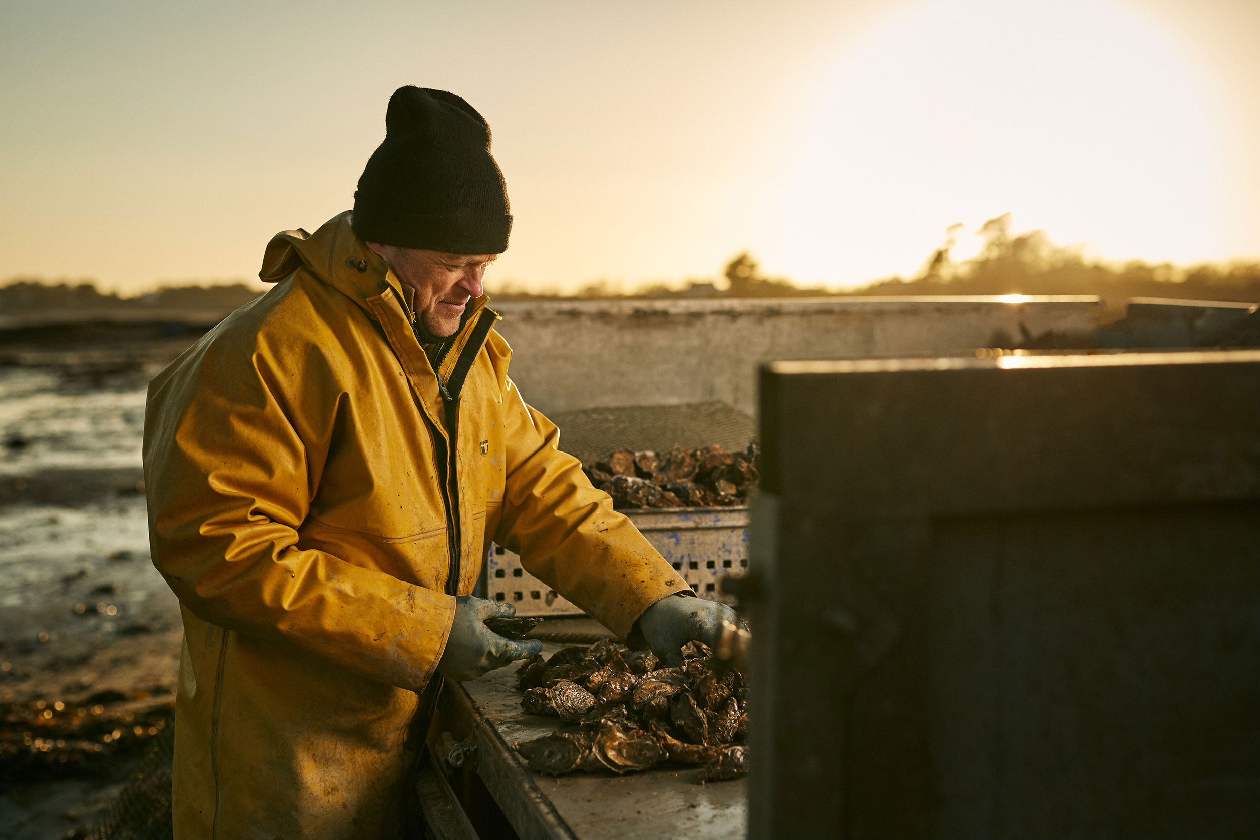 Oyster farmer, Shaun Krijen tends to his oyster catch by the Menai Strait by documentary photographer Duncan Elliott