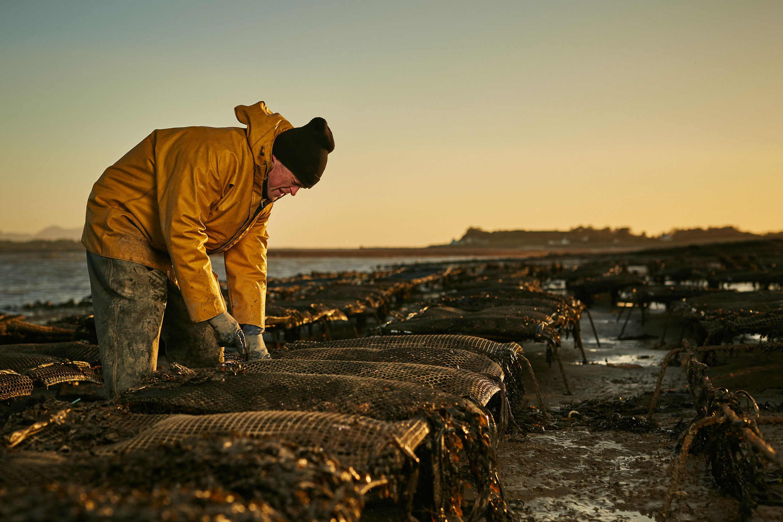 An oyster farmer, tends to his oyster beds by documentary photographer Duncan Elliott